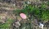 Весна пришла: догхантеры Петербурга разбрасывают отраву для собак по городу