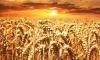Bloomberg: В мире намечается дефицит российской пшеницы