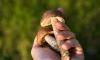 Пятеро грибников потерялись в лесах Ленинградской области