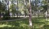 Кировский район атаковали гусеницы