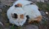 Смольный выделит 2 млн рублей на помощь бездомным котикам