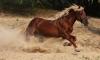 Отец пытается засудить тещу из-за лошади, лягнувшей дочь