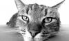 Кемеровчанин выставил на продажу кота-экстрасенса за 5 млн рублей
