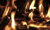 В страшном пожаре на Дунайском проспекте погибли женщина и два ее йоркширских терьера