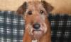 После взрыва на Народного Ополчения пропала собака