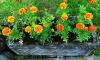 В первой декаде июня Выборг расцветет: работы по оформлению цветников будут завершены