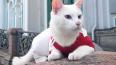 Эрмитажный кот Ахилл: сборная Бельгии выйдет в финал ...