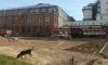 Горожане продолжают борьбу против уничтожения парков и скверов в Петербурге