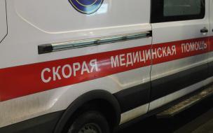 На Выборгском шоссе женщина жестоко избила пенсионера со шпицем