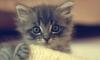 10 секретов о кошках и 5 лайфхаков для хозяев