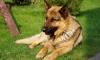 Живодера из Петербурга, который казнил пса Потапа, все-таки накажут