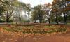 Названы самые грязные районы Петербурга