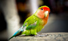 В Голландии полиция задержала попугая во время ограбления магазина