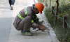 В Гатчине поймали 39 нелегальных сотрудников