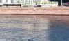 В 8 часов утра мужчина на серфе устроил заплыв по Неве