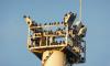 Перелетные чибисы облюбовали очистные сооружения петербургского Водоканала