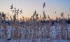 Спасатели помогли 10 рыбакам, застрявшим на льду залива у Зеленогорска