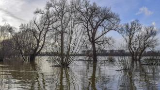 Жителей Ленобласти предупредили о сильных паводках