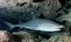 В калининградском зоопарке посетители стучали по стеклу аквариума и довели акулу до нервного срыва