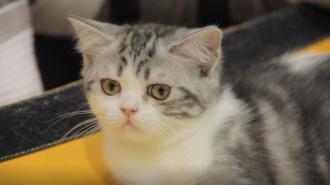 Петербургские депутаты хотят определить, сколько животных может проживать в квартире