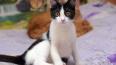 В Выборге предприниматели помогают приюту кошек в ...