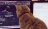 Коту-лахтинцу завели Instagram-аккаунт ко дню рождения