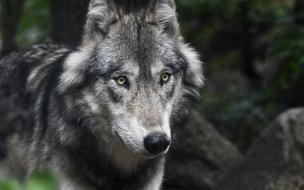 Биолог рассказал о самых опасных хищниках Петербурга и Ленобласти
