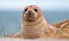 Пользовтелей сети порадовало забавное видео нападения домашнего кота на милого тюленя