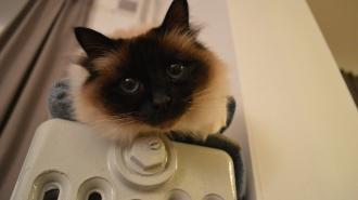 Специалисты рассказали, когда в Петербурге отключат отопление