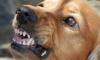 Во дворе детсада в Чите бездомная собака искусала ребенка