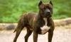 Убитый каратистом владелец бойцовой собаки оказался «малышевцем»