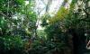 Снесли оранжерею, повредили деревья и газон: за что оштрафовали Лесотехнический университет