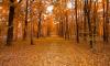 ЗакС не признал участок парк Малиновка частью зеленых насаждений