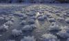 """На российских озерах распустились """"ледяные цветы"""". Водоемы покрылись редкими кристаллами"""