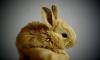 """Кролики заживо жарились и коптились в страшном пожаре в колонии """"Яблоневка"""""""