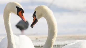 Ленинградский зоопарк подготовил необычный маршрут ко Дню всех влюбленных