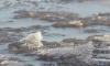 Спасатели продолжают искать провалившуюся под лед девочку в Лахтинском разливе