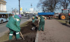 В центре Петербурга началась подготовка цветников к майским праздникам