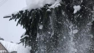 В ночь на 30 ноября в Ленобласти ожидается до -5 градусов