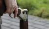 В Москве мужчина с винтовкой угрожает открыть огонь по прохожим