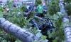 Старый тополь на Васильевском острове лишил автовладельца собственности
