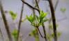 В четверг в Ленобласти ожидается усиление ветра