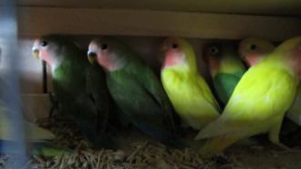 В Петербург прилетели 56 попугаев из Крыма