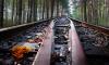 Грузовой поезд сбил пенсионера на перегоне «Мга-Назия»