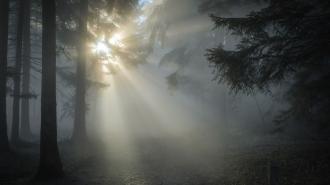 Пропавшего почти год назад пенсионера нашли мертвым на окраине леса в Ленобласти