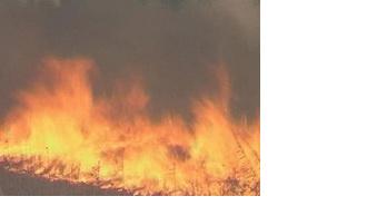 При тушении пожара на полигоне в Красном Бору пострадали люди