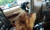 Две хитрые собаки угнали авто и врезались в супермаркет