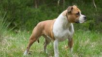 Топ-10 пород собак, наиболее опасных для человека