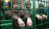 На стройке стадиона для Спартака арестовали 60 нелегалов