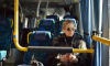 Из Хвойного в Красное Село пустят новый автобус